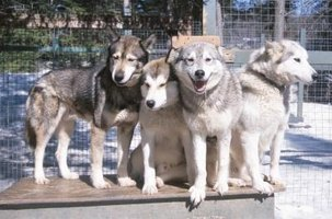 A large kennel can house more than one dog.