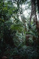 Rain forests are home to many plant species, some of  them poisonous.