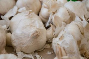 Garlic is a cheap and effective product to get rid of fleas