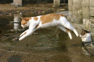 Natural pain relievers can put the spring back in Kitty's step.