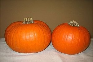 Pie pumpkins are smaller and sweeter than traditional halloween pumpkins, allowing them to be used to make pumpkin pie.