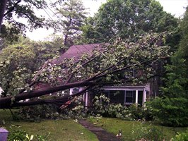 Safety is the immediate concern after the tree falls. Then removal and repair are paramount.