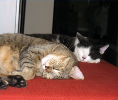 Samba and Diego were feral kittens. They now live happily with the author.