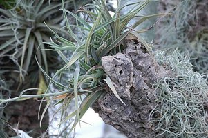 Take Care of Epiphytic Plants