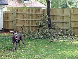 Fenced yard for dogs