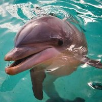 How Did Dolphins Get Their Name?