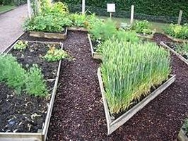 Materials for Building a Raised Vegetable Bed