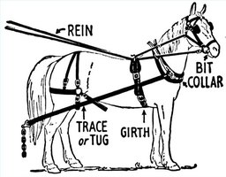 Fit a Horse Harness