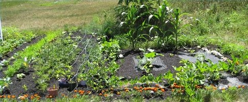 A Successful Easy To Grow Home Garden