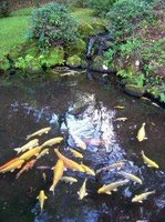 Home made pond filters can help beautify water gardens.