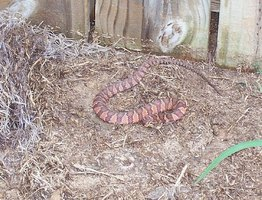 Unwelcome snake in your yard