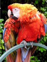 Cold Remedies for Macaws