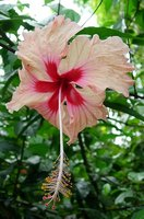 Types of Caribbean Flowers