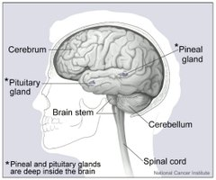 Signs & Symptoms of Fluid on the Brain