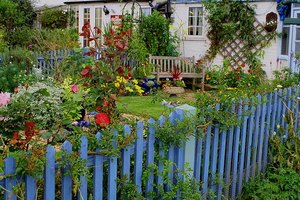 A striking blue fence accents the lovely plants in this garden.
