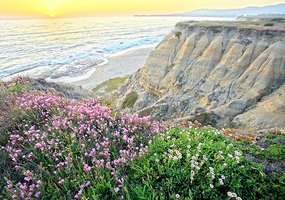 Flowers decorate a beach landscape.