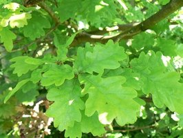 How To Identify Hardwood Trees For Firewood Ehow
