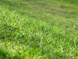 It takes effort to rid a lawn of crabgrass.