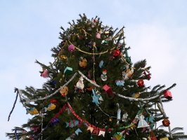 Blue spruce trees' sharp needles make them a bad Christmas tree choice.