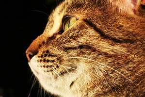 Cats can develop allergies to food they've eaten all their lives.