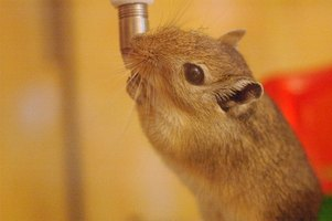 Gerbil mites can be a nuisance and carry disease.