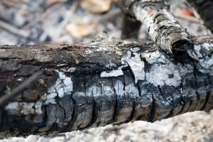 Ashes from a wood fire can shoot nutrients through the soil.