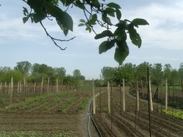 A vegetable garden is a wonderful way to eat healthy, go green and save money.