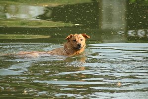 Not all dogs like the water, but many enjoy a swim.