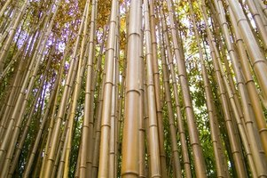Bamboo is a type of grass, and valued as flooring by environmentalists.