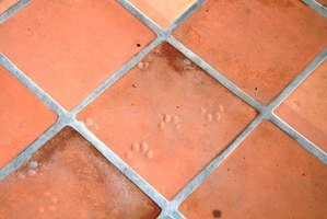 Mold thrives in the recesses of tile grout.