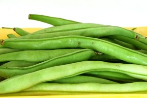 Get your green bean crop sooner by starting seeds before planting.