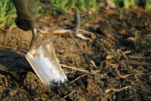 The right amount of fertilizer enriches garden soil.