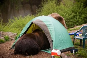 An animal stealing your food is the surest way to ruin a camping trip.