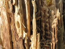 Natural termite insecticides can save you thousands of dollars in home repairs.