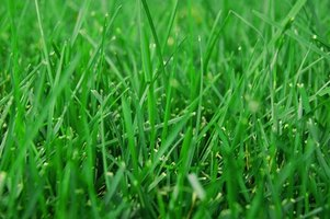 There are hundreds of varieties of grass.
