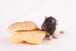 Rodent pests can carry diseases into your home and contaminate food.