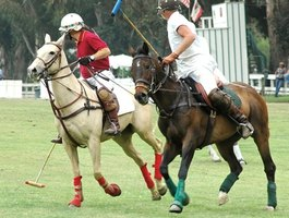 In polo, the horses are known as polo ponies.