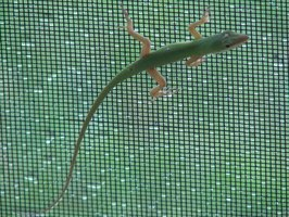 Keep out the critters with a window screen frame.