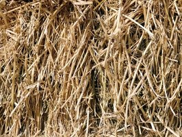 Bermuda grass can produce high-quality hay.