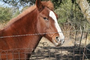 Woven wire is excellent for horse fences.