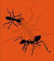 homemade citrus ant killer ehow. Black Bedroom Furniture Sets. Home Design Ideas