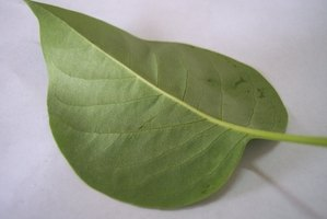 Leaf blades are categorized by type using dozens of different attributes.