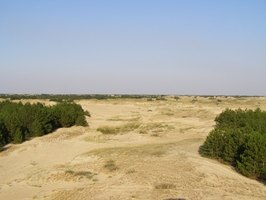 Coastal deserts are bionetworks, or biomes, that have few plant varieties and are inhospitable environments.
