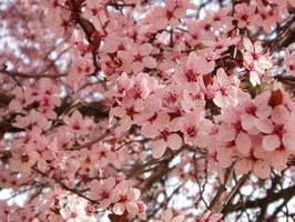 In zone 10, some flowering trees bloom all year round.