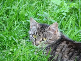 There are a number of plants that are toxic to cats.