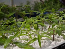 Start seedlings indoors in a homemade greenhouse.