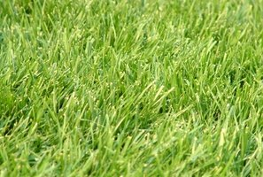 Choose a grass that will best suit your New England lawn.