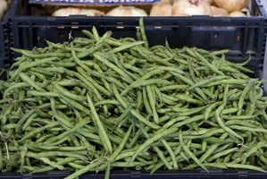 String beans are also called snap beans.