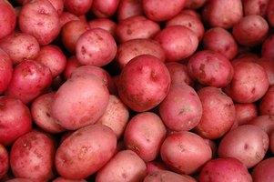Red Potato Plant