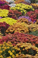 Flowers exist in abundance partly because of their colors and fragrance.